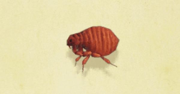 【あつ森】自らサカナやムシを欲しがる住民たまにいるよね…【どうぶつの森 まとめ】(どうぶつの森まとめ速報)