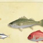 【あつ森】スズキ、現実では高級魚なのにね…【どうぶつの森 まとめ】(どうぶつの森まとめ速報)