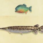 【あつ森】レア魚けっこう釣れるのに特定の魚だけ釣れない…(色んなまとめ)