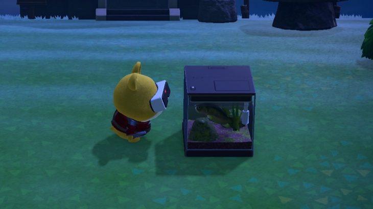 【あつ森】VRで遊ぶグラハムちゃん(色んなまとめ)
