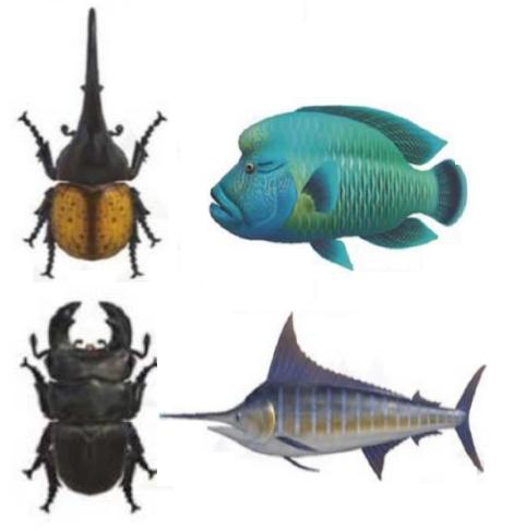 【あつ森】北半球で7月から出現する虫・魚まとめ【攻略】(色んなまとめ)
