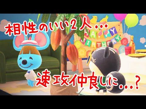 【あつ森】相性のいい住民の家を隣同士にすると…2人で誕生日パーティーをし始めます【あつまれどうぶつの森】【実況】(くるみ)