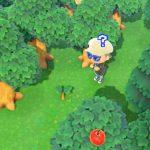 【あつ森】木の隣に○○埋めると成長止められるのか【小ネタ】(色んなまとめ)