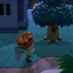 【あつ森】今日から始めたけど木に止まってる虫捕まえるの難しい…→〇〇するとやりやすいよ(色んなまとめ)