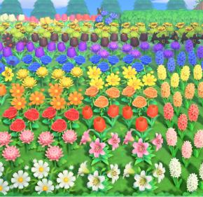 【あつ森】花の交配があと少しで全部咲かせられそう。でも、終わったら交配ロスになりそう…(色んなまとめ)