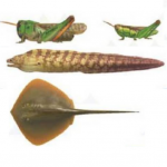 【あつ森】8月から出現する虫・魚・海の幸一覧まとめ【攻略】(色んなまとめ)