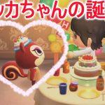 【あつ森】一年で一番大切な日!レベッカちゃん誕生日おめでとう!【あつまれどうぶつの森】(みねっと)