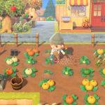 【あつ森】色違いのかぼちゃができる確率はどれくらいだろうね?←うちは80植えて○○だった(色んなまとめ)