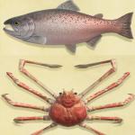 【あつ森】9月から出現する虫・魚・海の幸一覧(色んなまとめ)