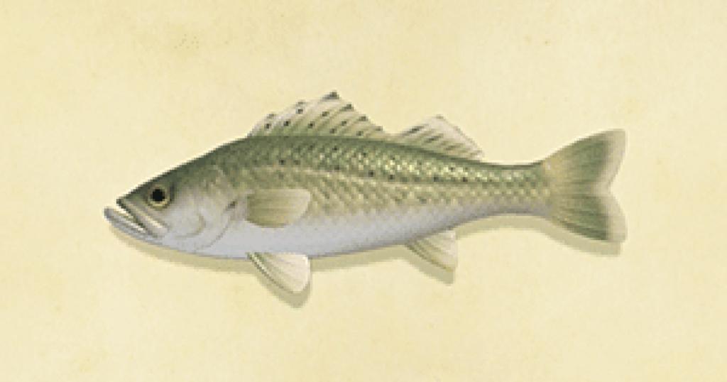 【あつ森】あつ森の微妙にモヤる所「どこに住む魚か関係なくどこでもリリースできる」(色んなまとめ)