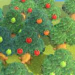 【あつ森】フルーツの木って揺らして落とした時は蜂とか家具でない?(色んなまとめ)