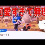 【あつ森】ハロウィンイベントでジンペイが可愛すぎてテンションがおかしくなりました【あつまれどうぶつの森/Animal Crossing】【実況/シュガートース島/くるみ/しゃちく/しゃちくるみ】(くるみ)