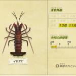 【あつ森】10月から出現する虫・魚・海の幸一覧(色んなまとめ)