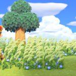 【あつ森】森っぽい景観にしたいけど雑草生やしとくと評価下がるし…←ある程度なら雑草生えてても大丈夫!(色んなまとめ)