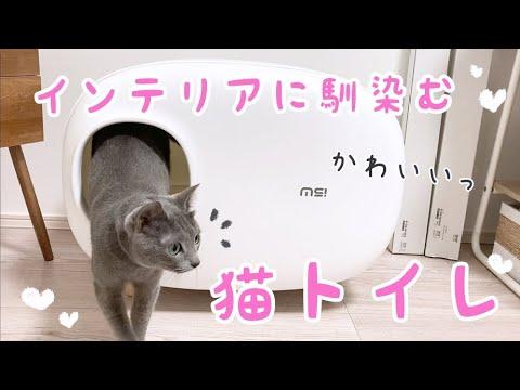【部屋紹介】これは凄い!あつ森みたいなインテリアに馴染むお洒落で可愛い猫トイレをレビュー!【猫トイレ/くるみ/あつ森/あつまれどうぶつの森/しゃちくるみ】