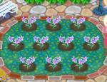 【ポケ森】ガーデンイベントの花、全部残ってる時と回収される時ない?【どうぶつの森 まとめ】