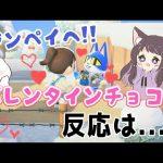 【あつ森】今日はバレンタインデー♡ジンペイにバレンタインチョコあげてみた!反応は!?【あつまれどうぶつの森/Animal Crossing】【実況/シュガートース島/くるみ/しゃちく/しゃちくるみ】