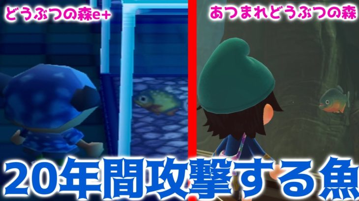 【どうぶつの森】20年間ずっと住民にアタックし続けた魚がいるらしい!?【どうぶつの森e+からあつまれどうぶつの森】